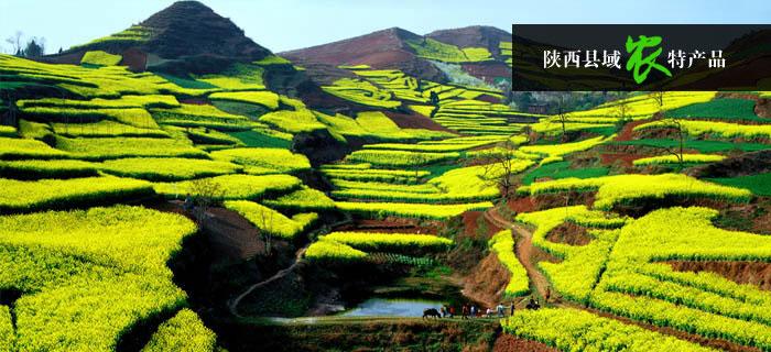 都市田园 — 陕西县域农特资源整合运营平台